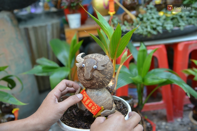 Độc đáo dừa bonsai hình con trâu khiến người Sài Gòn bỏ hàng triệu đồng mua chơi Tết Tân Sửu 2021 - ảnh 7