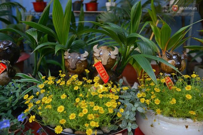 Độc đáo dừa bonsai hình con trâu khiến người Sài Gòn bỏ hàng triệu đồng mua chơi Tết Tân Sửu 2021 - ảnh 13