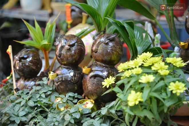 Độc đáo dừa bonsai hình con trâu khiến người Sài Gòn bỏ hàng triệu đồng mua chơi Tết Tân Sửu 2021 - ảnh 17