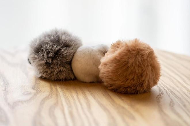 Chú chuột hamster đáng yêu nhất MXH Việt hôm nay: Quốc tịch Nhật Bản, đáng yêu hết phần thiên hạ với những kiểu tạo dáng độc đáo hết nấc - ảnh 5