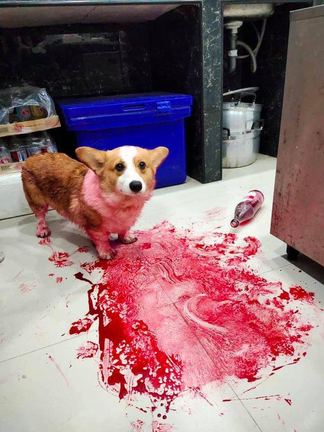 Tìm chó đi lạc, chàng trai kinh hãi phát hiện con vật đang nằm im trong vũng máu cạnh con dao nhưng sự thật đằng sau khiến ai cũng ngã ngửa - ảnh 3