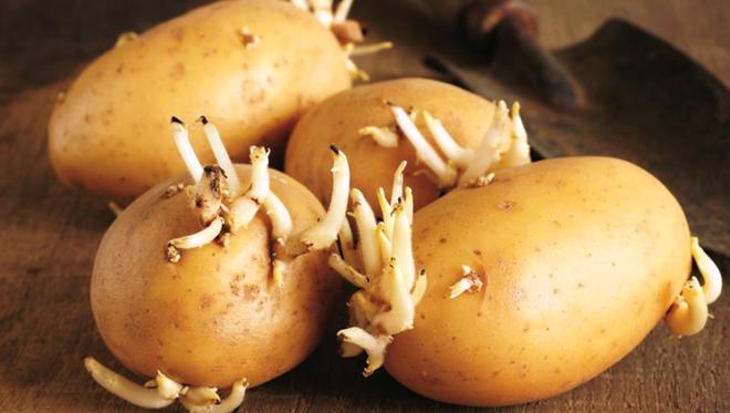 2 loại rau củ mọc mầm không hề độc hại mà dinh dưỡng còn tăng lên gấp bội luôn - ảnh 1