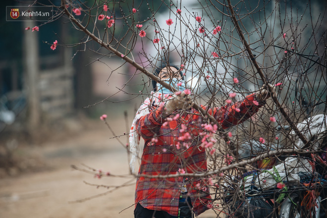 Ảnh: Trời lạnh sương mờ, làng đào Nhật Tân khoe sắc, đúng là Tết đang đến rất gần rồi! - ảnh 8