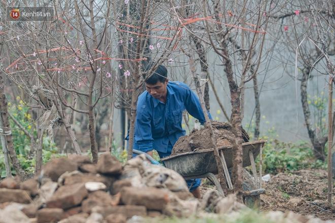 Ảnh: Trời lạnh sương mờ, làng đào Nhật Tân khoe sắc, đúng là Tết đang đến rất gần rồi! - ảnh 6