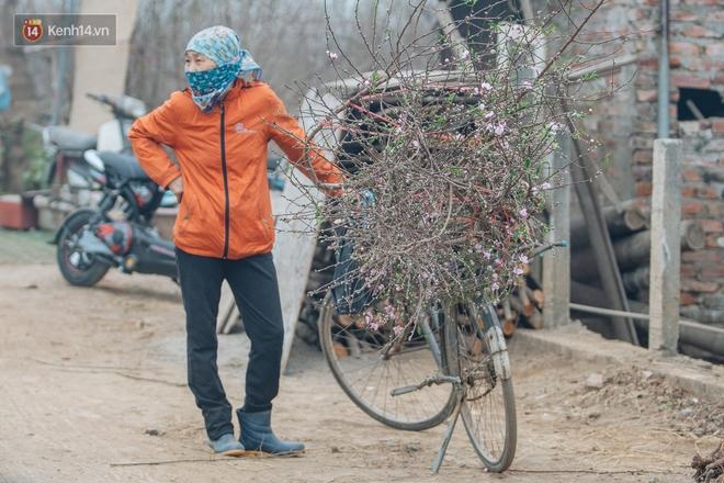 Ảnh: Trời lạnh sương mờ, làng đào Nhật Tân khoe sắc, đúng là Tết đang đến rất gần rồi! - ảnh 10