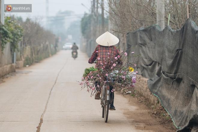 Ảnh: Trời lạnh sương mờ, làng đào Nhật Tân khoe sắc, đúng là Tết đang đến rất gần rồi! - ảnh 12
