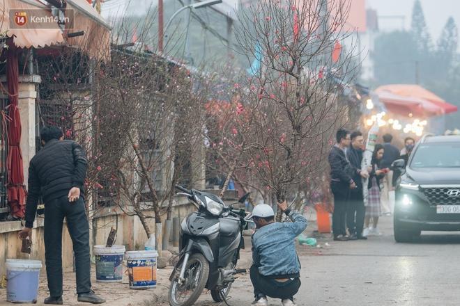 Ảnh: Trời lạnh sương mờ, làng đào Nhật Tân khoe sắc, đúng là Tết đang đến rất gần rồi! - ảnh 18