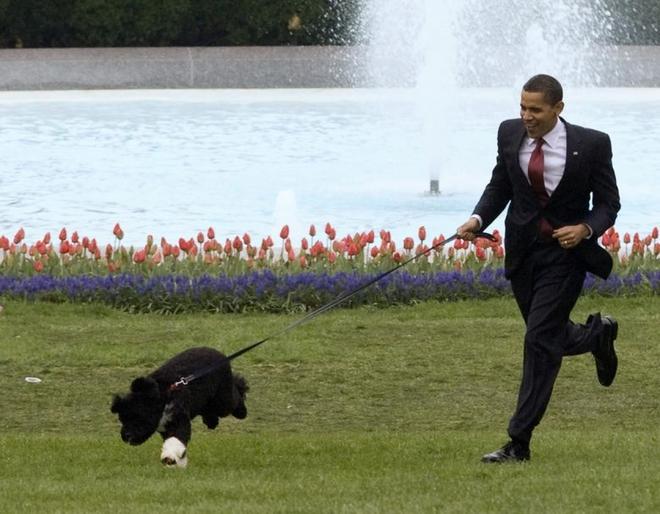 """Những """"đệ nhất thú cưng"""" của các tổng thống Mỹ - ảnh 13"""