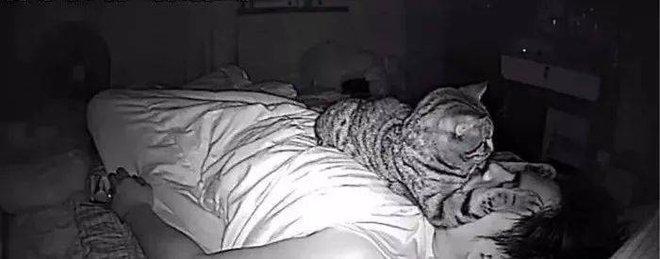 Thức dậy bỗng dưng thấy cả người đau nhức, cô gái vội kiểm tra camera mới ngỡ ngàng nhận ra mình bị mèo cưng trừng phạt cả đêm - ảnh 4
