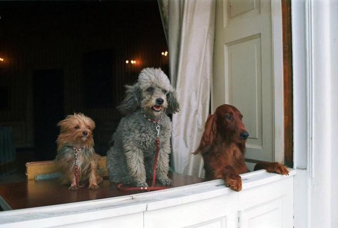 """Những """"đệ nhất thú cưng"""" của các tổng thống Mỹ - ảnh 5"""
