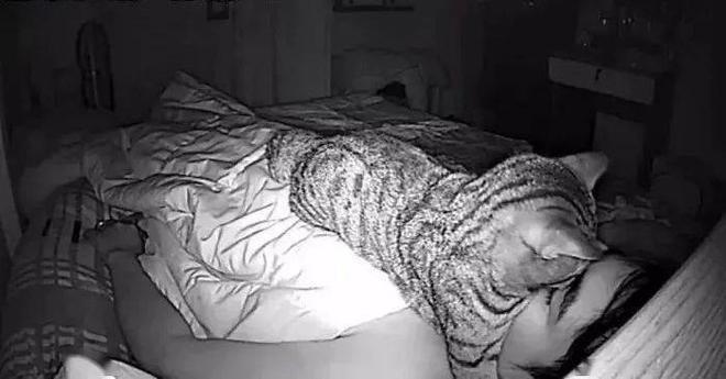 Thức dậy bỗng dưng thấy cả người đau nhức, cô gái vội kiểm tra camera mới ngỡ ngàng nhận ra mình bị mèo cưng trừng phạt cả đêm - ảnh 7