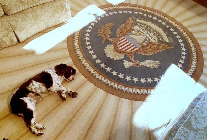 """Những """"đệ nhất thú cưng"""" của các tổng thống Mỹ - ảnh 9"""
