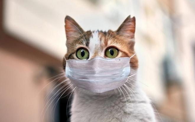 Ca lây nhiễm Covid-19 đầu tiên ở thú cưng tại Hàn Quốc - ảnh 1