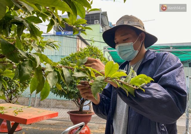 Bỏ 200 triệu thuê 30 người lặt lá mai vài ngày đón Tết Tân Sửu 2021 - ảnh 8