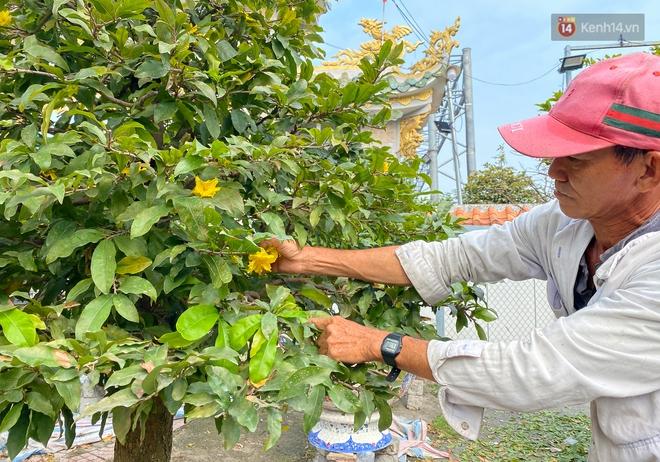 Bỏ 200 triệu thuê 30 người lặt lá mai vài ngày đón Tết Tân Sửu 2021 - ảnh 10