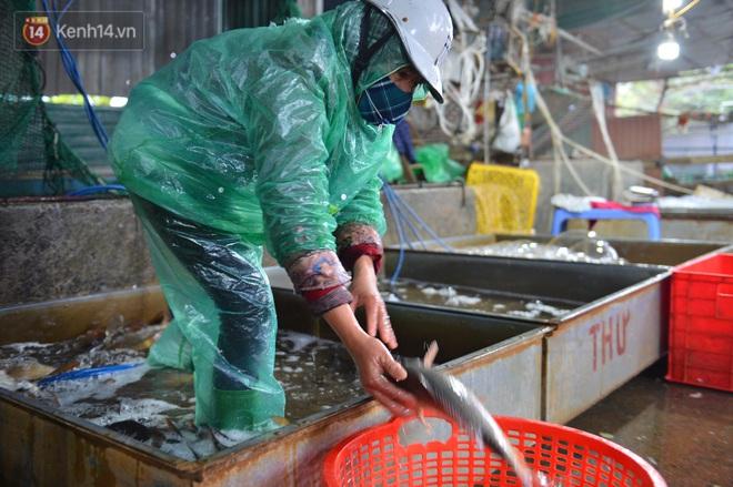 Những bàn tay trần khiêng đá lạnh, bắt cá tươi trong cái giá rét dưới 10 độ: Buốt lắm, buốt đến thấu xương... - Ảnh 4.