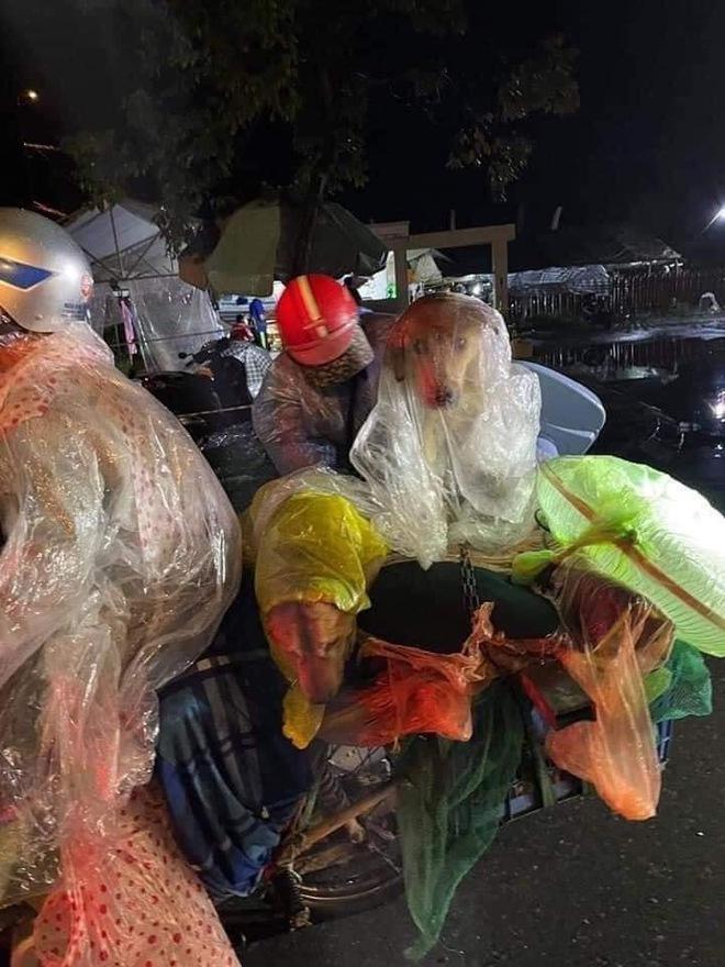 Hành trình về Cà Mau đầy đau lòng của 15 chú chó: Chính quyền địa phương xác nhận đã tiêu huỷ - Ảnh 3.