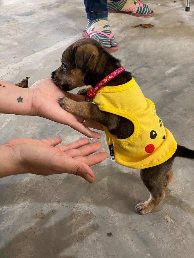 """Vụ đàn chó 15 con bị tiêu huỷ: 1 chú cún may mắn sống sót, người chủ mới khẳng định """"sẽ tặng lại vì nó là 1 phần kỷ niệm của cô chú"""" - Ảnh 4."""