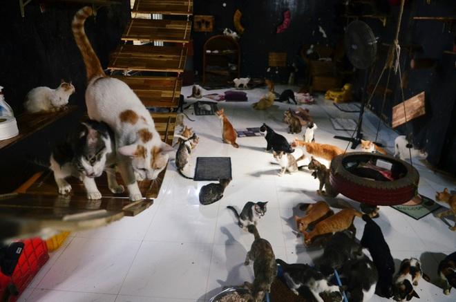 Cặp vợ chồng cưu mang 100 con chó, mèo bị chủ F0 bỏ rơi mùa dịch: Chúng tôi không sinh con để chu toàn cho tụi nhỏ - ảnh 8