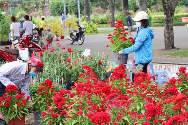 ẢNH: Sau khi tiểu thương ở Sài Gòn vứt bỏ hoa ế, nhiều người dân tranh thủ đến xin đất, lượm hoa mang về trưa 30 Tết - Ảnh 8.
