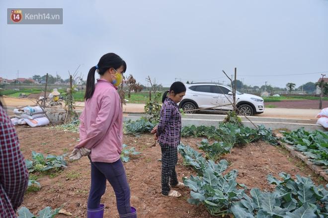 Nước mắt sau Tết: Người nông dân nhổ bỏ cải bắp, su hào vì ế không bán được - Ảnh 6.