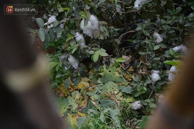 Nước mắt sau Tết: Người nông dân nhổ bỏ cải bắp, su hào vì ế không bán được - Ảnh 8.