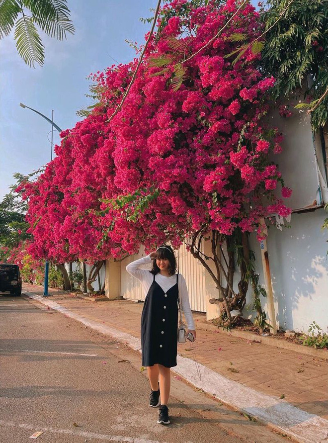 """Paper flower truss """"extreme"""" is causing a storm in Vung Tau because its blooming is so beautiful, people race to ask for addresses to check-in - Photo 10."""