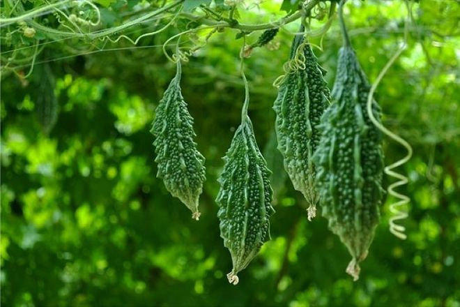 Huỳnh Lập kinh ngạc khi thấy loại quả đầy gai xuất hiện trong vườn nhà Hoài Linh, đảm bảo dân thành thị cực hiếm người biết - Ảnh 4.