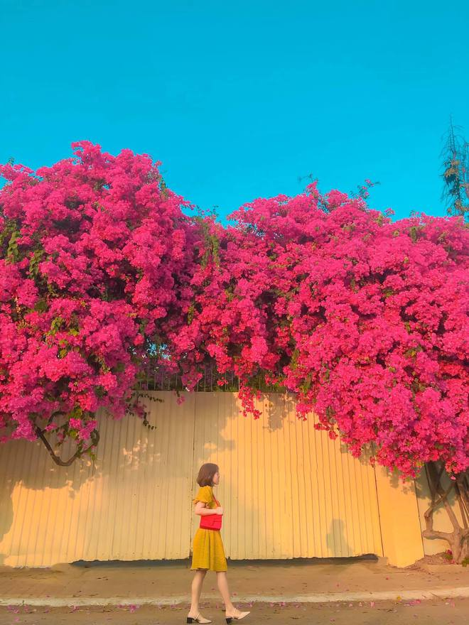 """Paper flower truss """"extreme"""" is causing a storm in Vung Tau because its blooming is so beautiful, people race to ask for addresses to check-in - Photo 8."""