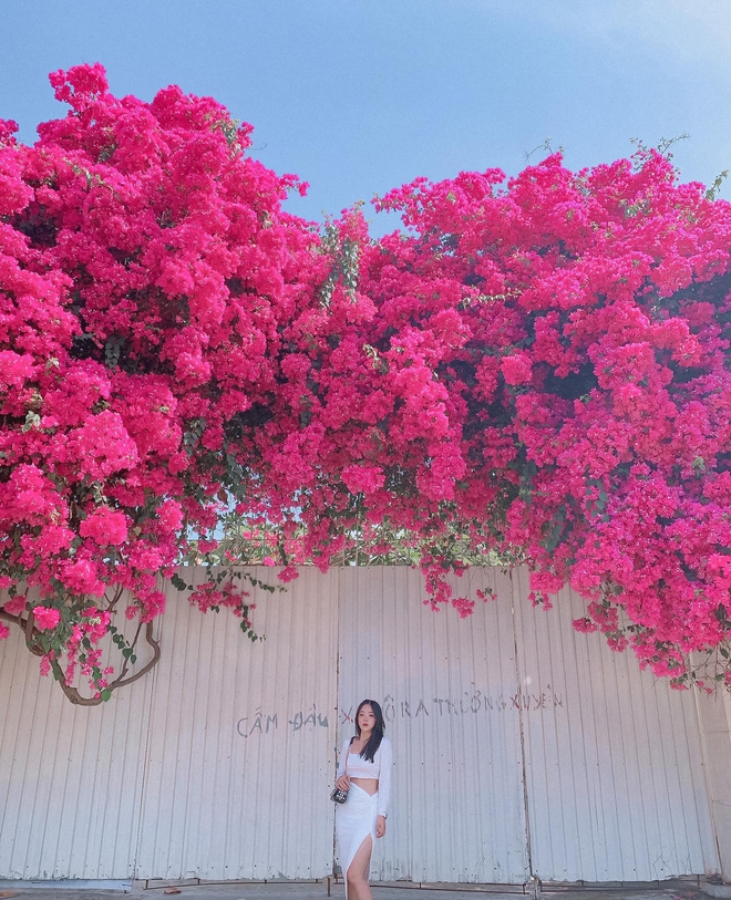 """Paper flower truss """"extreme"""" is causing a storm in Vung Tau because its blooming is so beautiful, people race to ask for addresses to check-in - Photo 2."""
