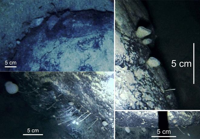 GoPro giúp các nhà khoa học tìm ra 12 loài động vật chưa từng được biết đến dưới lớp băng ở Nam Cực - ảnh 8