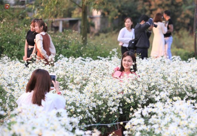 Ảnh: Vườn cúc họa mi tuyệt đẹp, mở cửa miễn phí ở Đà Nẵng thu hút hàng trăm người kéo đến - Ảnh 3.