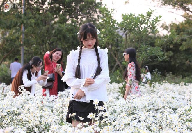 Ảnh: Vườn cúc họa mi tuyệt đẹp, mở cửa miễn phí ở Đà Nẵng thu hút hàng trăm người kéo đến - Ảnh 7.