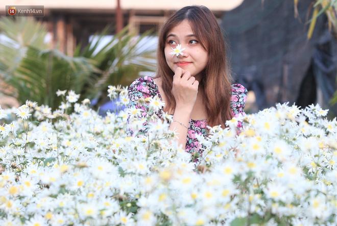 Ảnh: Vườn cúc họa mi tuyệt đẹp, mở cửa miễn phí ở Đà Nẵng thu hút hàng trăm người kéo đến - Ảnh 5.