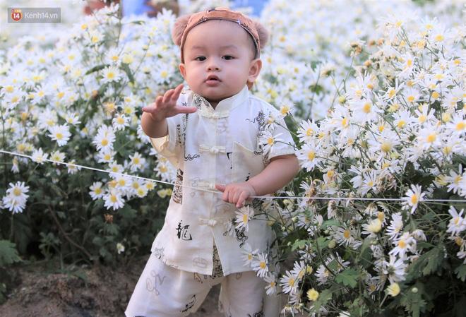 Ảnh: Vườn cúc họa mi tuyệt đẹp, mở cửa miễn phí ở Đà Nẵng thu hút hàng trăm người kéo đến - Ảnh 14.
