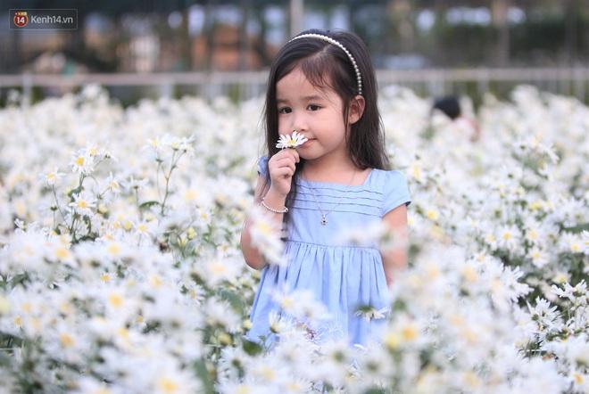 Ảnh: Vườn cúc họa mi tuyệt đẹp, mở cửa miễn phí ở Đà Nẵng thu hút hàng trăm người kéo đến - Ảnh 15.
