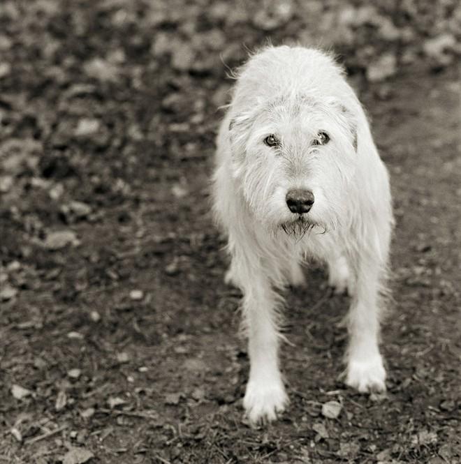Chùm ảnh những con vật được cho phép sống đến già gây ám ảnh lạ kỳ: Khi các mảnh đời ngắn ngủi được ban tặng sự sống buồn tủi - ảnh 11