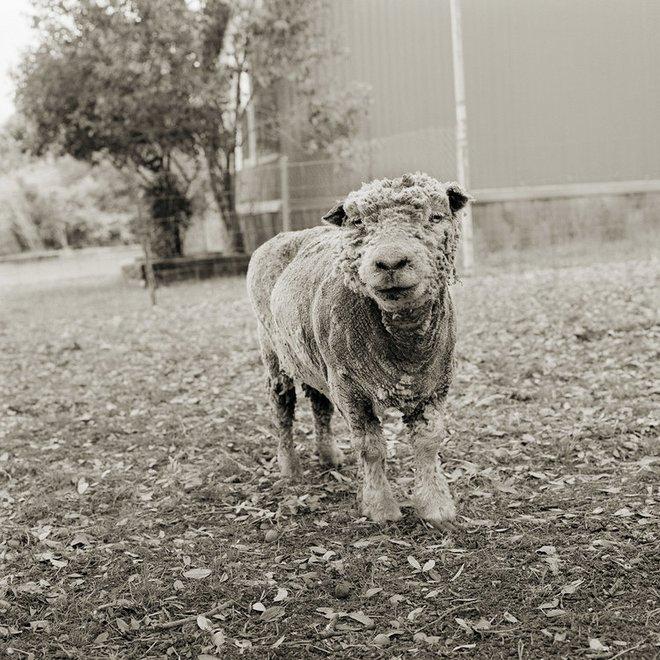 Chùm ảnh những con vật được cho phép sống đến già gây ám ảnh lạ kỳ: Khi các mảnh đời ngắn ngủi được ban tặng sự sống buồn tủi - ảnh 12