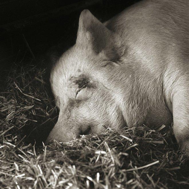 Chùm ảnh những con vật được cho phép sống đến già gây ám ảnh lạ kỳ: Khi các mảnh đời ngắn ngủi được ban tặng sự sống buồn tủi - ảnh 13