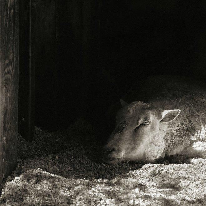 Chùm ảnh những con vật được cho phép sống đến già gây ám ảnh lạ kỳ: Khi các mảnh đời ngắn ngủi được ban tặng sự sống buồn tủi - ảnh 14