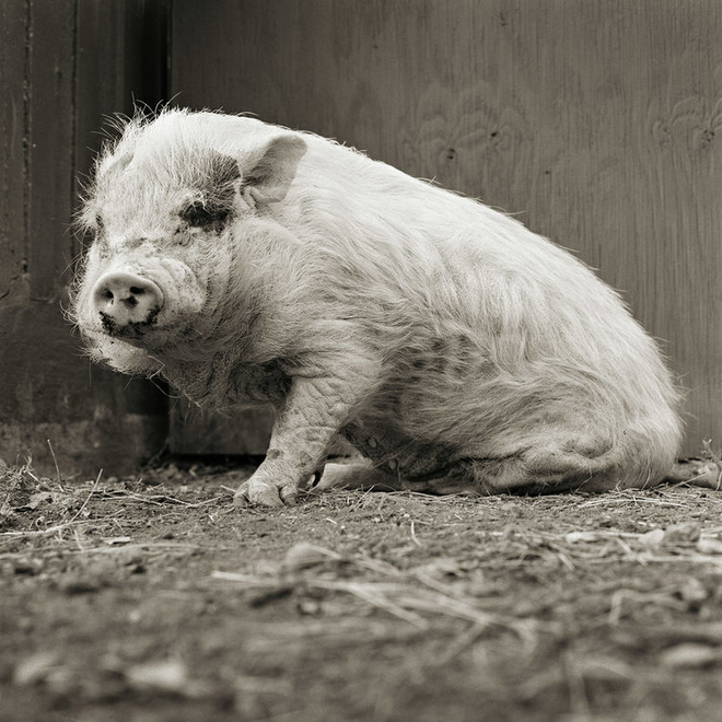Chùm ảnh những con vật được cho phép sống đến già gây ám ảnh lạ kỳ: Khi các mảnh đời ngắn ngủi được ban tặng sự sống buồn tủi - ảnh 5