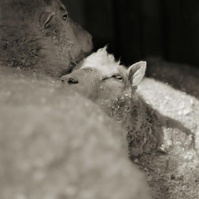 Chùm ảnh những con vật được cho phép sống đến già gây ám ảnh lạ kỳ: Khi các mảnh đời ngắn ngủi được ban tặng sự sống buồn tủi - ảnh 8
