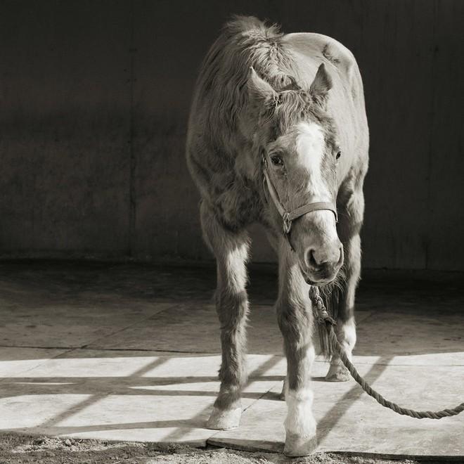 Chùm ảnh những con vật được cho phép sống đến già gây ám ảnh lạ kỳ: Khi các mảnh đời ngắn ngủi được ban tặng sự sống buồn tủi - ảnh 9