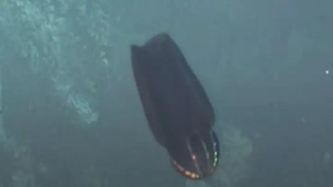Clip: Rùng mình xem quái vật biển thay hình đổi dạng ở độ sâu 1127m, trước và sau trông chả liên quan - Ảnh 3.