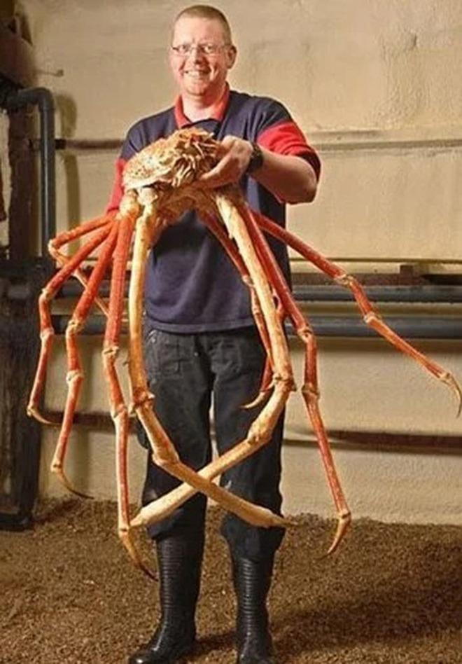 Cận cảnh chú cua biển nặng tận 7kg bị sa lưới ở Móng Cái đang được đấu giá, nhìn size cái càng thôi cũng đủ choáng! - Ảnh 2.