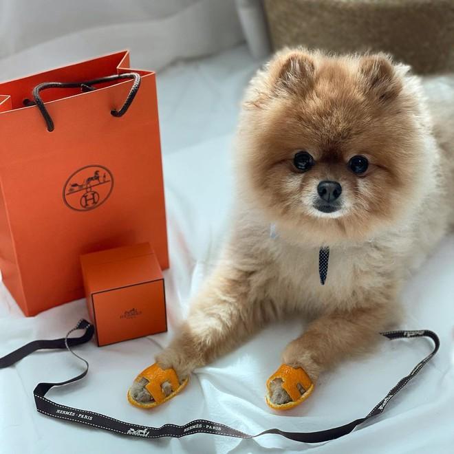 Đàm Thu Trang gây sốt với dép Hermès vỏ bưởi, tưởng mới nhưng hóa ra đã là hot trend từ bao giờ - ảnh 10