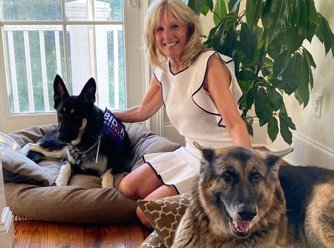 Chó cưng của Tổng thống Joe Biden bị đuổi về quê vì cắn mật vụ Nhà Trắng - Ảnh 3.