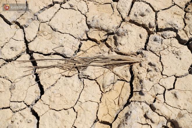 Người miền Tây bên những cánh đồng nứt toác vì hạn mặn: Lúa trồng xuống là chết, nước sông mặn đắng cả rồi! - ảnh 4