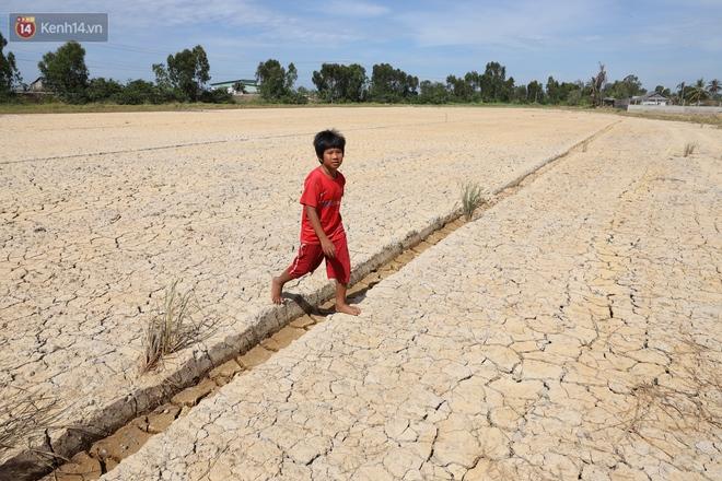 Người miền Tây bên những cánh đồng nứt toác vì hạn mặn: Lúa trồng xuống là chết, nước sông mặn đắng cả rồi! - ảnh 5