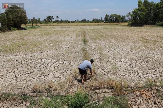 Người miền Tây bên những cánh đồng nứt toác vì hạn mặn: Lúa trồng xuống là chết, nước sông mặn đắng cả rồi! - ảnh 17